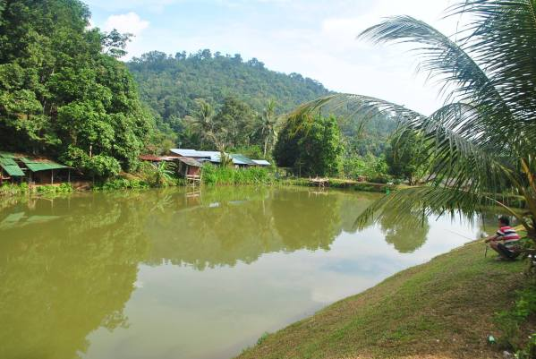 asli-farm-resort-car-camping-malaysia-5