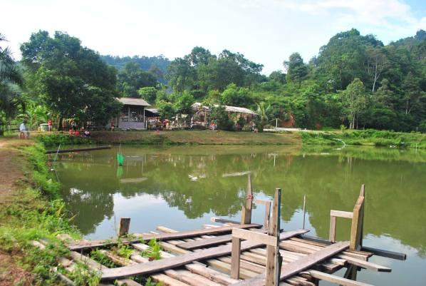 asli-farm-resort-car-camping-malaysia
