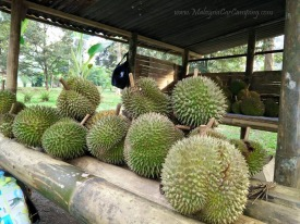 malaysia-car-camping-ubipadi-leisure-farm-hulu-langat (29)